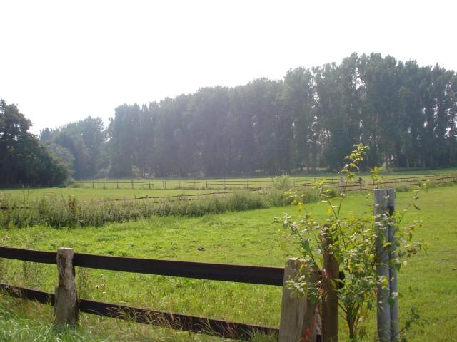 Blick auf die Weiden